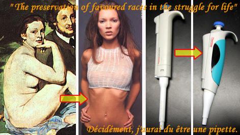 Où l'ergonomie et la mode exercent une selection naturelle différente