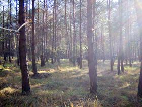 un coin à champignons caché en plein coeur de la forêt d'Orléans