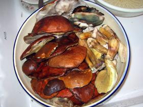 ce ne sont pas des crabes. ce sont des bolets. propres.